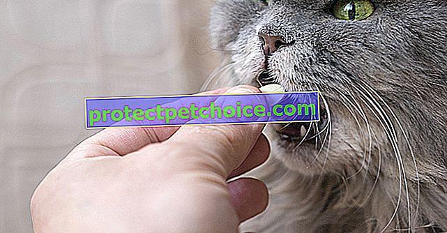 Як ефективно і м'яко давати ліки моєму коту?