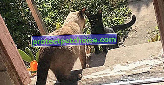 Котката се сприятелява с жената и нейната котка, чувствайки, че неродените котенца ще бъдат в безопасност с тях