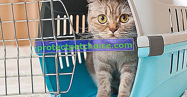 Избор на транспортна кутия за вашата котка