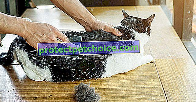 Péče o vlasy vaší kočky