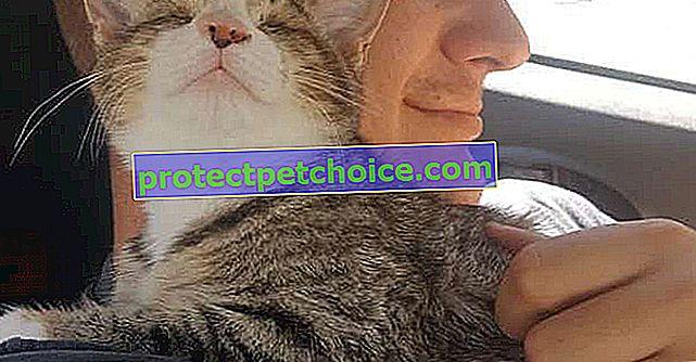 Kör doğan, kurtarılan ve evlat edinilen bir yavru kedi, etrafındaki herkesi çatlatır
