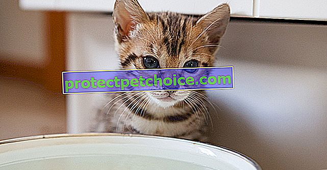 Kot potrzebuje wody