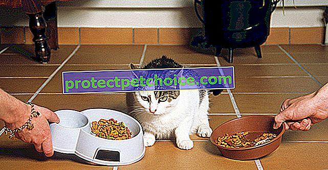 Výběr správného granule pro vaši kočku