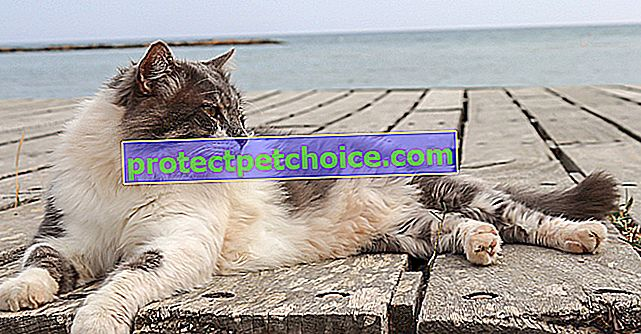 Štěstí této kočky, která objeví pláž, vás vyzařuje