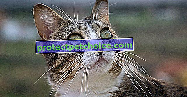 Sąsiedzi próbują się zjednoczyć, aby uratować porzuconego kota w jej domu
