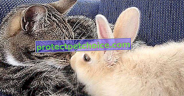 Poseban odnos mačke i zeca koji su se voljeli na prvi pogled!