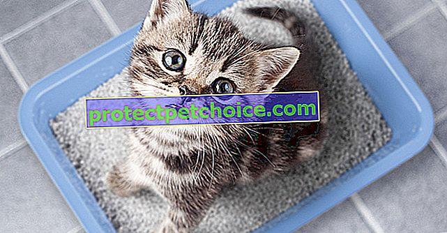 Osnovni pribor za dobrodošlicu mačiću