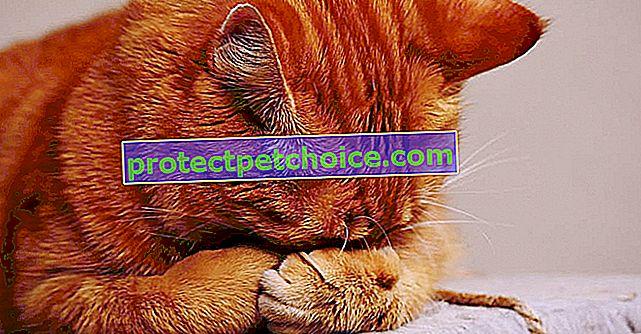 5 consejos para limpiar eficazmente la orina del gato