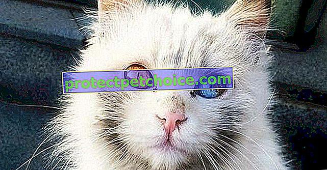 22 koček a psů, které nedokonalosti dělají krásnými