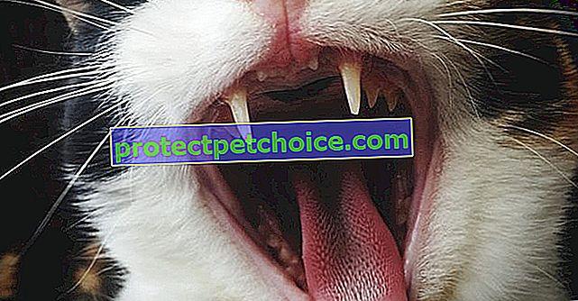 5 неща, които трябва да знаете за зъбите на вашата котка