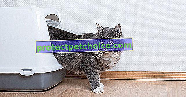 7 съвета за скриване на кутията за отпадъци на вашата котка