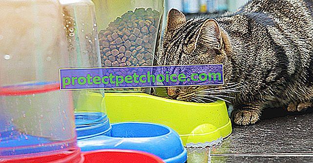 ¿Cuáles son las diferencias entre la comida orgánica y la comida natural para gatos?