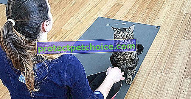 Mačka joga, disciplina popularnija no ikad!