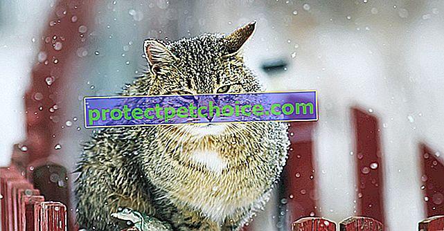 Zaštitite svoju mačku od hladnoće