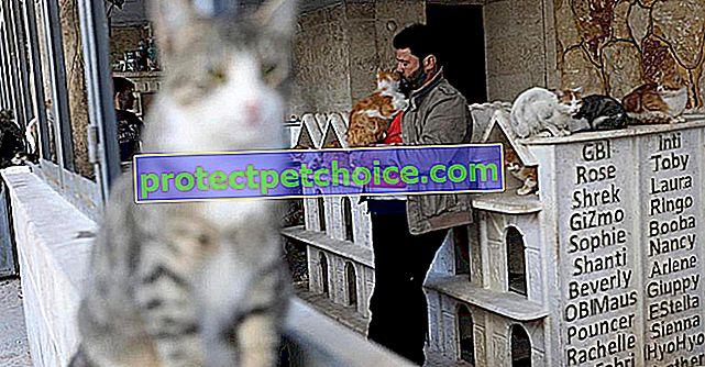 ¡Este sirio está dedicando su vida a salvar a los gatos víctimas de la guerra en Alepo y a construirles un santuario!