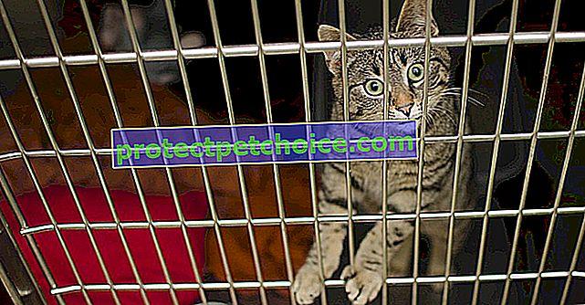 ¡En Bretaña, se ha creado un colectivo para salvar a los gatos de la eutanasia!