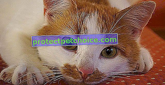 Udržování drápů vaší kočky