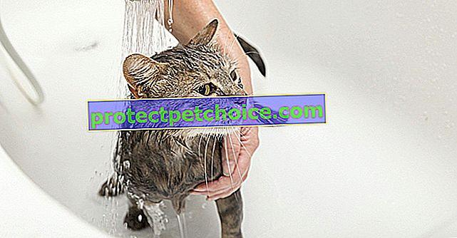 Измийте котката си