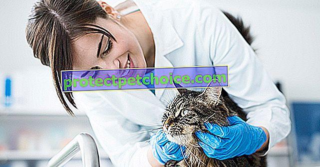 Цени за ветеринарни грижи за котки