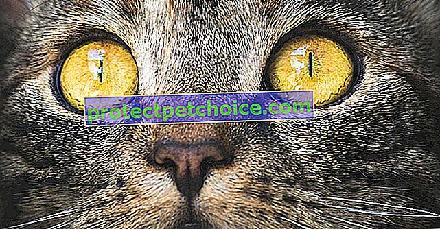 Nemoci kočičích očí