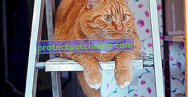 Коли проводити дегельмінтизацію кота?