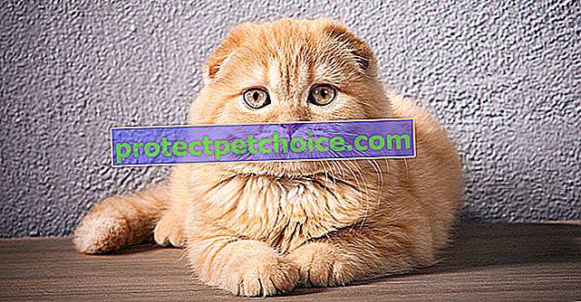 Cáncer y tumores en gatos