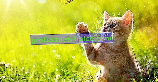 Nejlepší R jména pro kočku