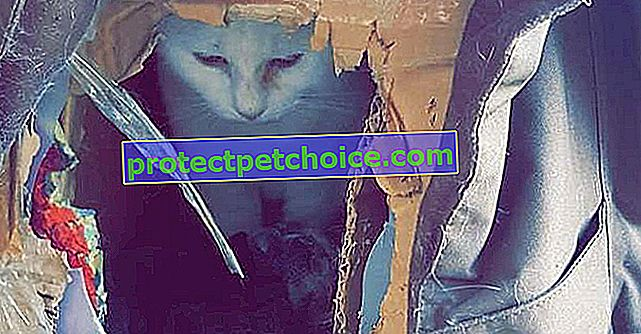 Napuštena, mačka pronalazi utočište u kartonskoj kutiji. Obitelj ga usvaja!