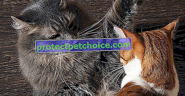 Sukobi mačaka