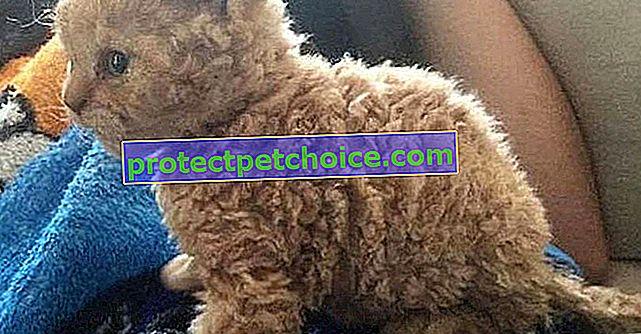 20 fotografií kočičích ovcí, díky nimž budete chtít pohladit obrazovku