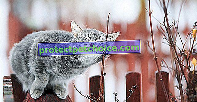 Sedm smyslů kočky