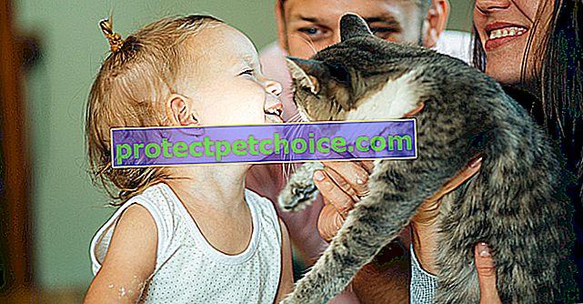 Sobrellevar la muerte de tu gato