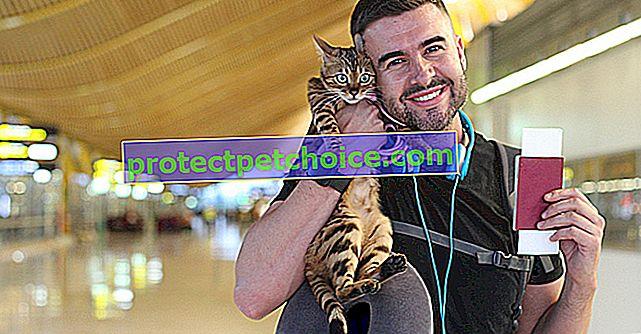 Как да пътувате с котката си със самолет?