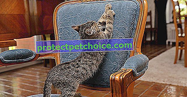 Evita que tu gato se rasque