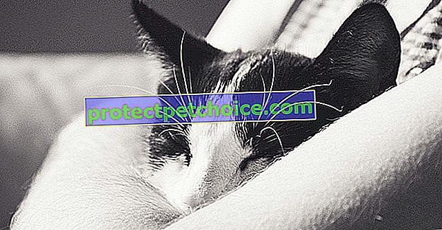 13 znakova da vas mačka voli