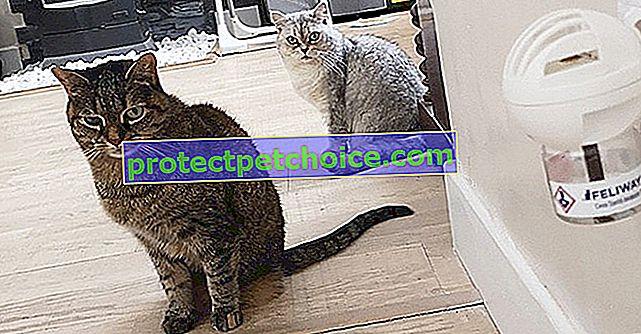Testirali smo za vas Feliway Friends, emitera kako bi smanjili sukobe između mačaka