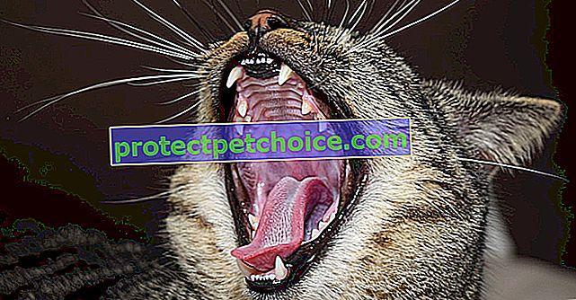 Umyj zęby kota