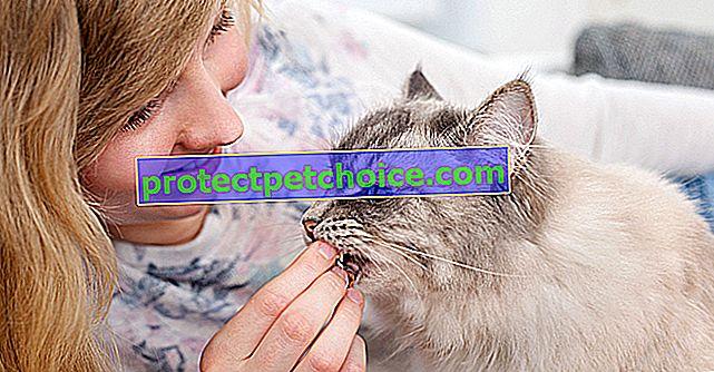 Какви лакомства да изберете за вашата котка?