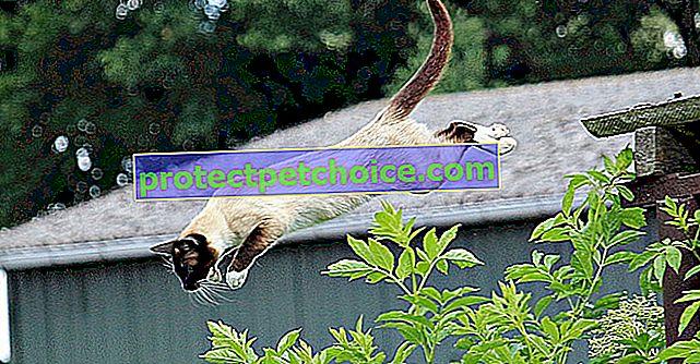 7 videí koček, které zcela selhaly ve svých pokusech o skok