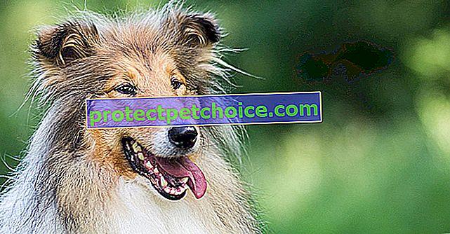 Perros famosos y sus razas.