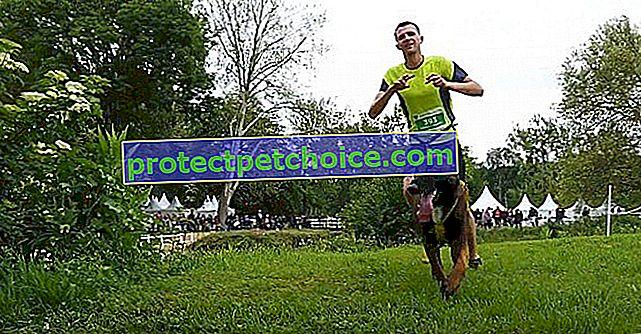 Woof Run 2020: la 3a edición del gran evento deportivo canino promete ser emocionante