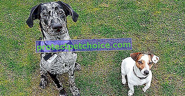 Woopets протестував для вас новий нашийник для собак Weenect Dogs 2 GPS