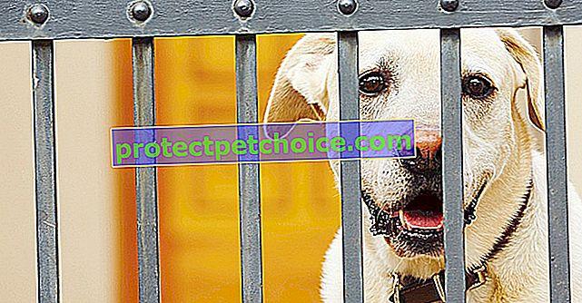 Protiproudový elektrický plot pro psy