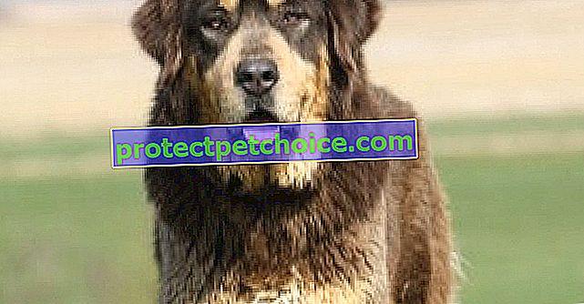 Pes zachránil stepi a mongolské tradice