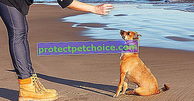 Jak přimět vašeho psa k poslušnosti?