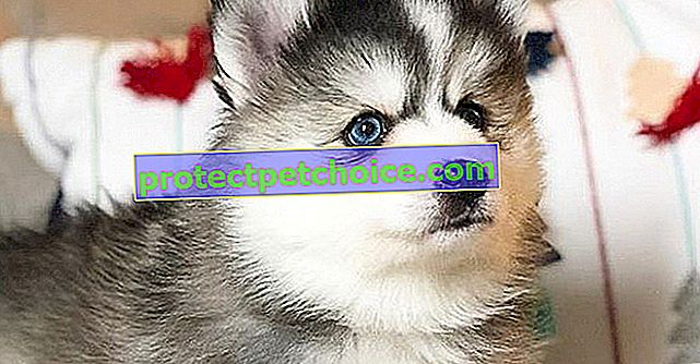 16 fotos que demuestran que a los perros mestizos no les falta encanto