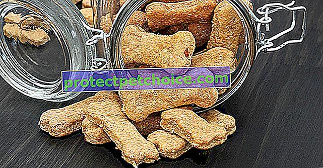 Ideas de recetas para galletas y golosinas para perros