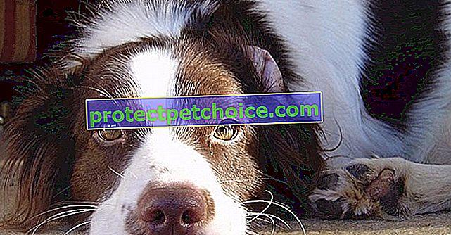 5 věcí, které byste měli vědět před eutanazací svého psa