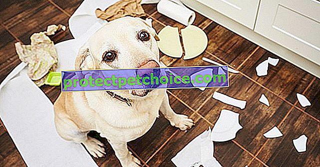 13 věcí, které lidé dělají, které psi nemají rádi
