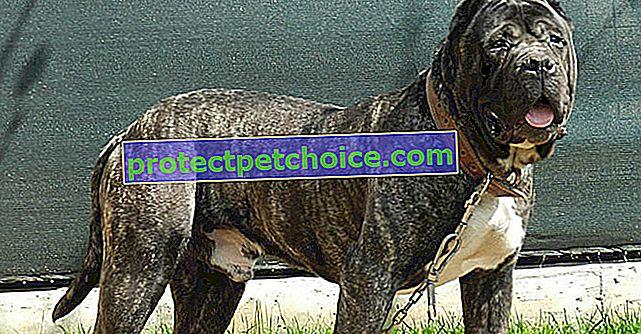 En Estados Unidos, estas 10 razas de perros son la obsesión de las aseguradoras